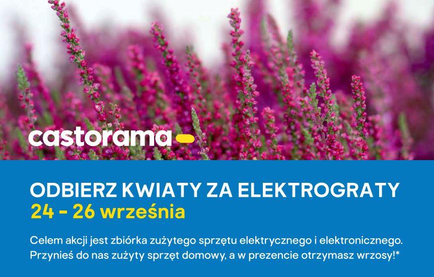 Kwiaty Za Elektrograty W Castoramie Juz W Tym Tygodniu Starosadeckie Info